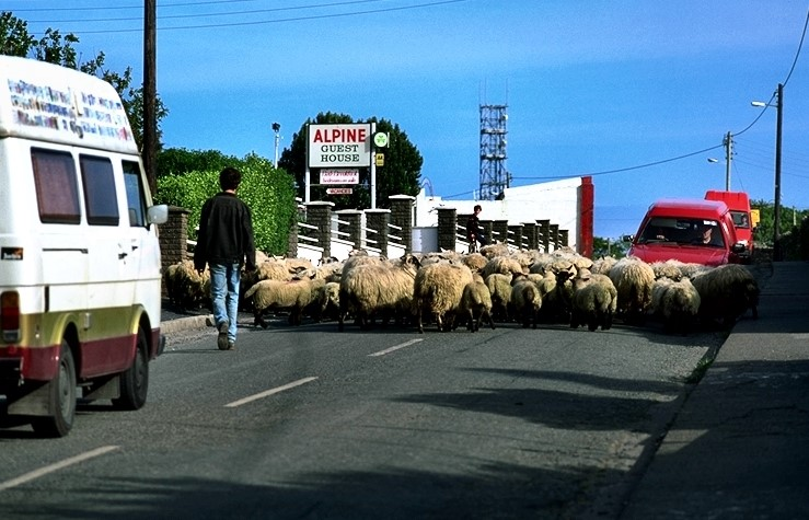 Traffic can sometimes look like this when traveling in Ireland.