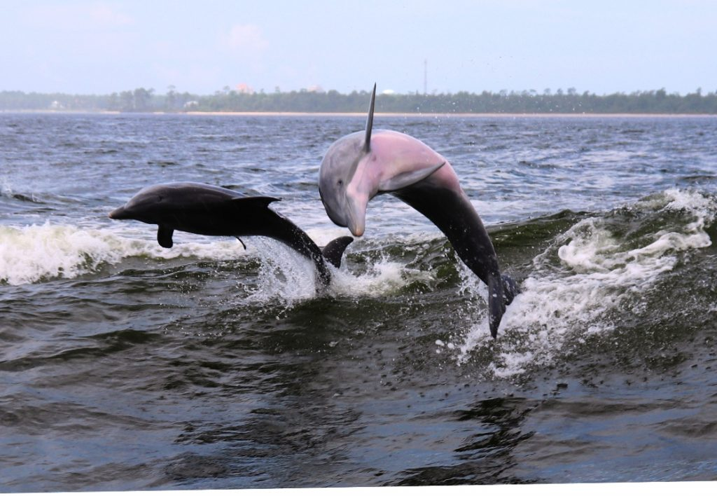 A Dolphin Cruise in Orange Beach, Alabama is a family favorite
