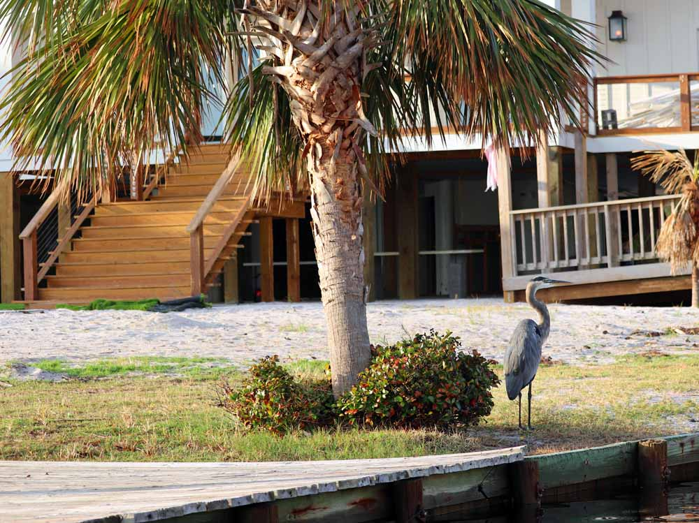 A heron hanging out in his favorite spot in Orange Beach