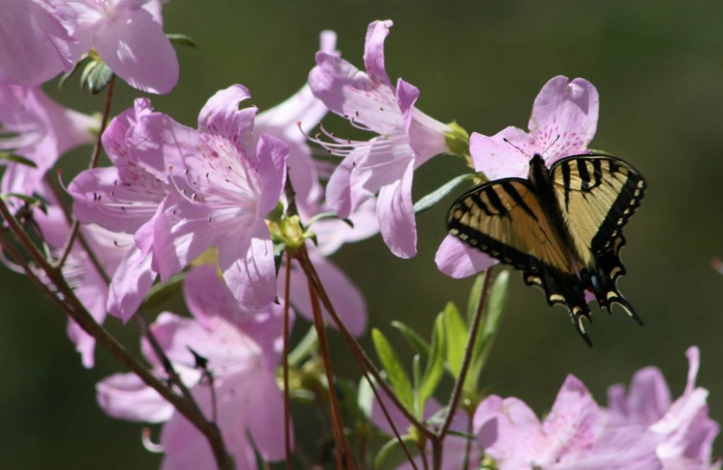 Take a break at the Butterfly Garden along the Backcountry Trail